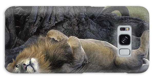 African Lion Panthera Leo Wild Kenya Galaxy Case by Dave Welling