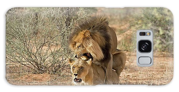 Behaviour Galaxy Case - African Lions Mating by Tony Camacho