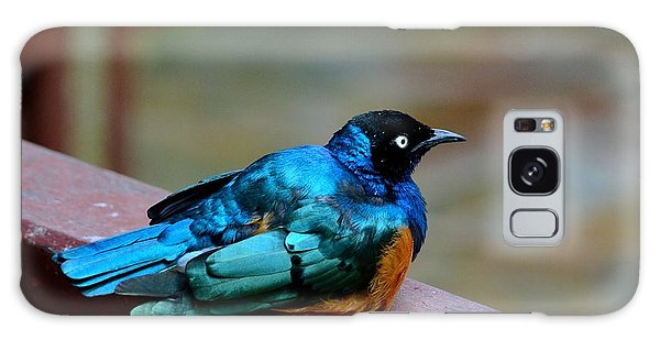 African Superb Starling Bird Rests On Wooden Beam Galaxy Case