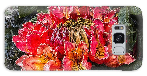 African Tulip Tree Flowers Galaxy Case