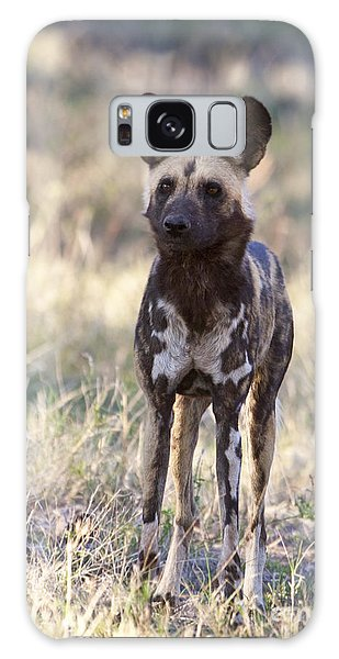 African Wild Dog  Lycaon Pictus Galaxy Case