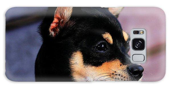 Agie - Chihuahua Pitbull Galaxy Case