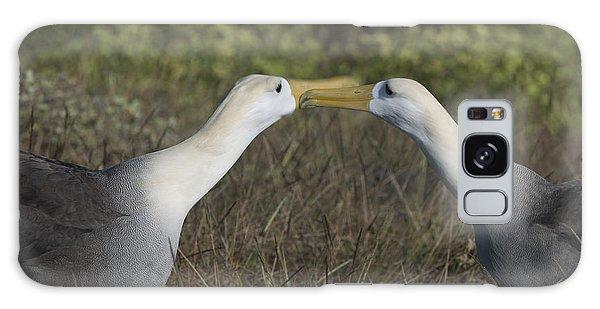 Albatross Perform Courtship Ritual Galaxy Case