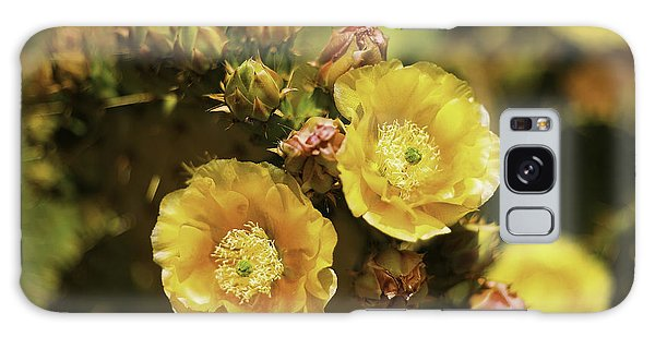 'albispina' Cactus #3 Galaxy Case