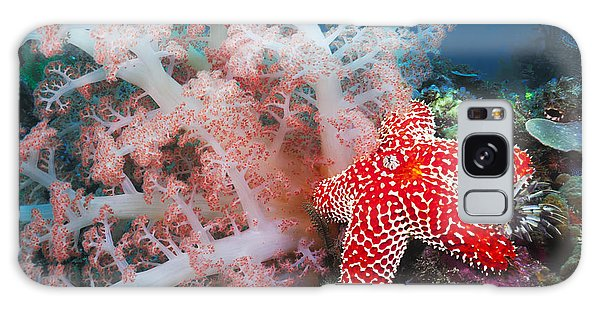 Feather Stars Galaxy Case - Alconarian Coral, Starfish, Crinoids And A Feather Dust Worm All Compete For Space In This Indonesian Reef Scene Off Rinca Island In Komodo National Park_ Indonesia by Dave Fleetham