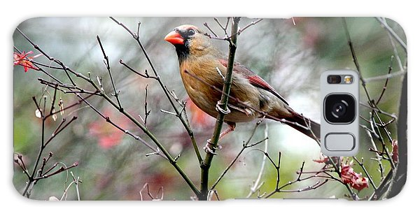 Alert - Northern Cardinal Galaxy Case by Ramabhadran Thirupattur