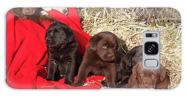 Chocolate Lab Galaxy Case - All Three Colors Of Labrador Retriever by Zandria Muench Beraldo