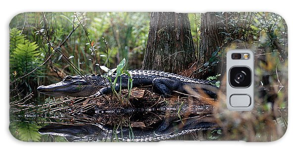 Alligator In Okefenokee Swamp Galaxy Case