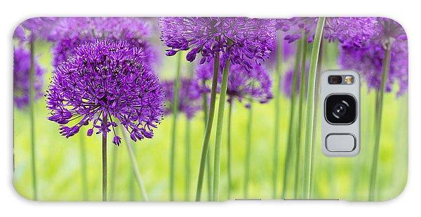 Allium Hollandicum Purple Sensation Flowers Galaxy Case