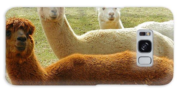 Alpaca Trio Galaxy Case