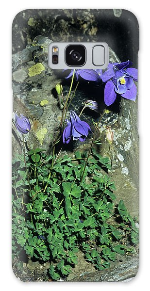 Aquilegia Galaxy Case - Alpine Columbine Flowers by Brian Gadsby/science Photo Library