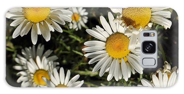 Alpine Daisies In Glacier National Park Galaxy Case