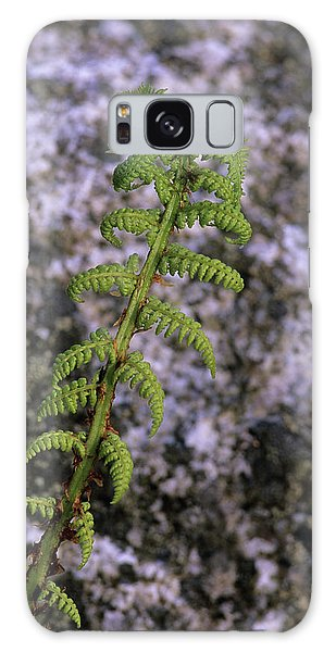 Cairngorms National Park Galaxy Case - Alpine Lady Fern by Duncan Shaw/science Photo Library
