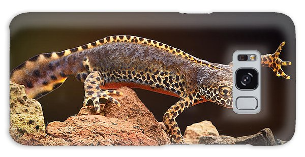 Newts Galaxy Case - Alpine Newt by Dirk Ercken