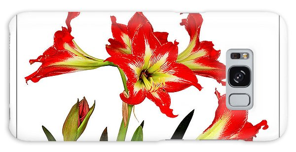Amaryllis On White Galaxy Case by David Perry Lawrence