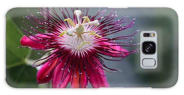 Amazing Passion Flower Galaxy Case