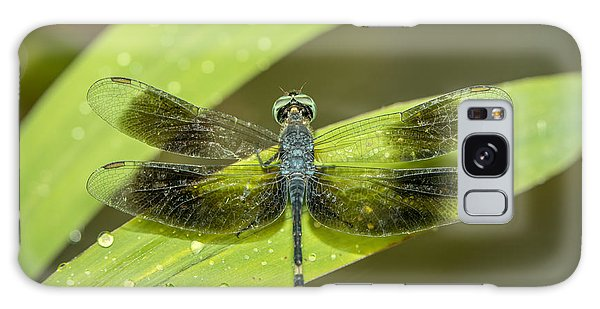 Amazon Dragon Fly Galaxy Case