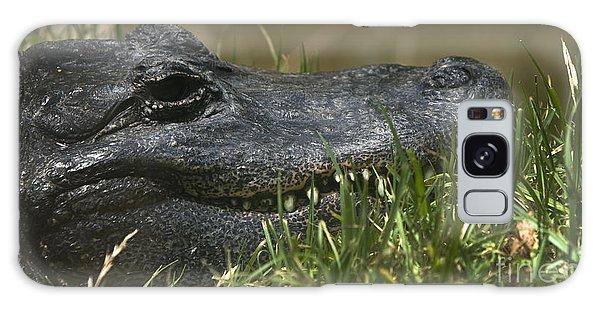 American Alligator Closeup Galaxy Case by David Millenheft