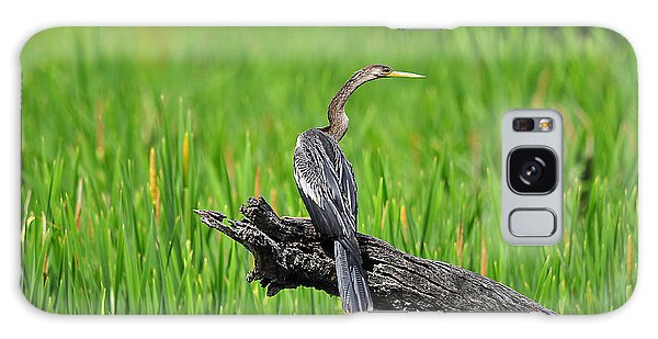 American Anhinga Galaxy Case by Al Powell Photography USA