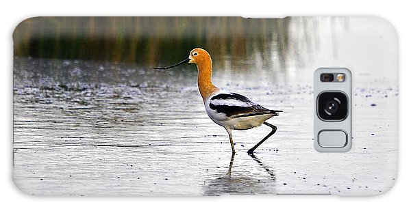 American Avocet Galaxy Case