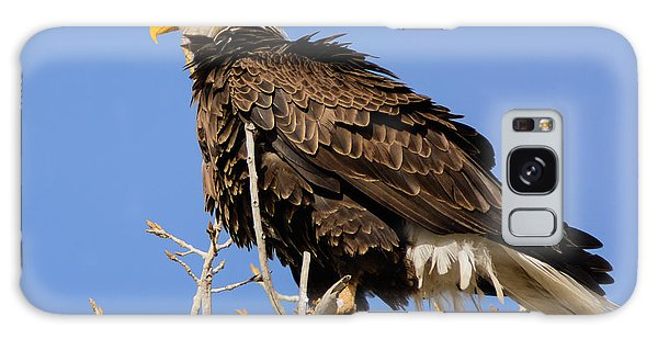 American Bald Eagle Standing Proud Galaxy Case by Stephen  Johnson