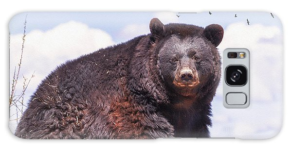 American Black Bear Galaxy Case