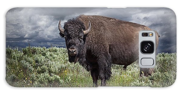 American Buffalo Or Bison In Yellowstone Galaxy Case