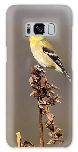 American Goldfinch 9 Galaxy Case by David Lester