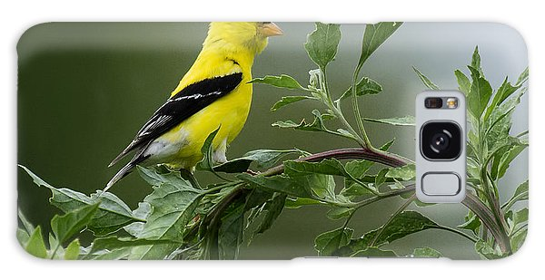 American Goldfinch Delight 2 Galaxy Case by David Lester
