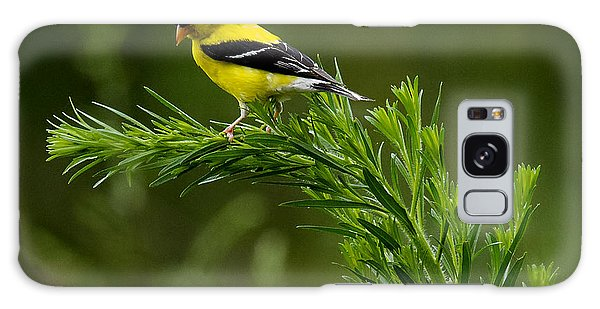 American Goldfinch Delight Galaxy Case by David Lester