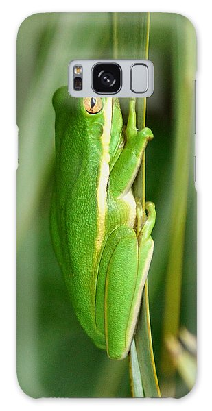 American Green Tree Frog Galaxy Case by Kim Pate