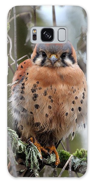 American Kestrel Galaxy Case