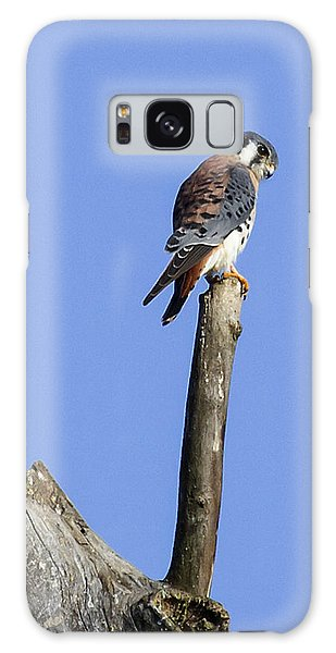 American Kestrel Galaxy Case by David Lester