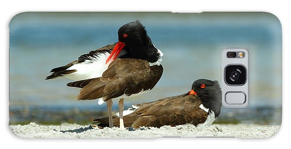 American Oystercatcher Grooming Galaxy Case