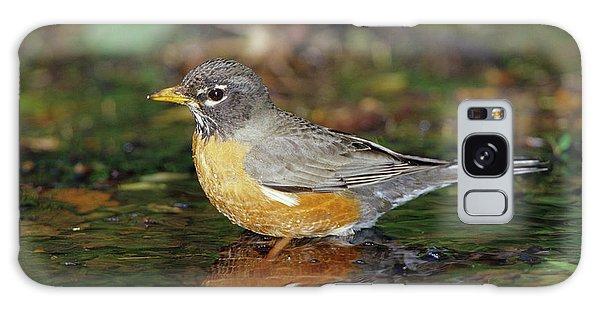 American Robin (turdis Migratorius Galaxy Case