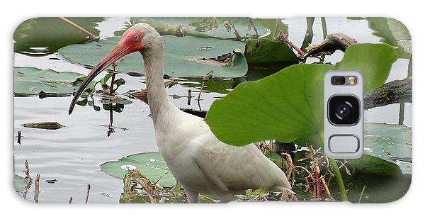 American White Ibis In Brazos Bend Galaxy S8 Case