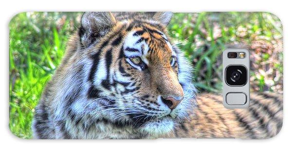 Amur Tiger 5 Galaxy Case