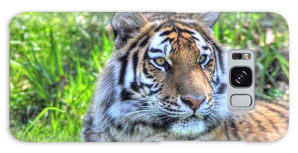 Amur Tiger 6 Galaxy Case