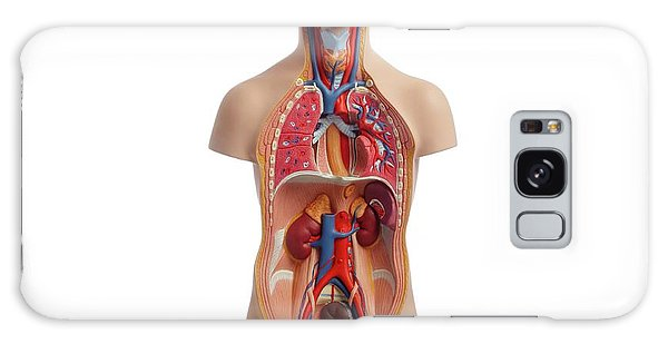 Anatomical Model Galaxy Case - Anatomical Teaching Model by Science Photo Library