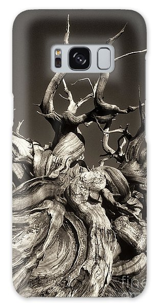 Ancient Bristlecone Pine In Black And White Galaxy Case