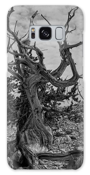 Ancient Bristlecone Pine Galaxy Case