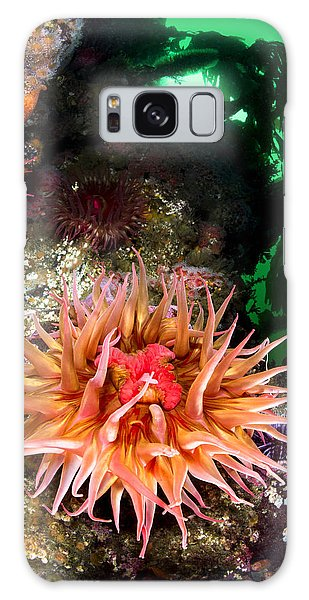 Anemone Feeding Galaxy Case