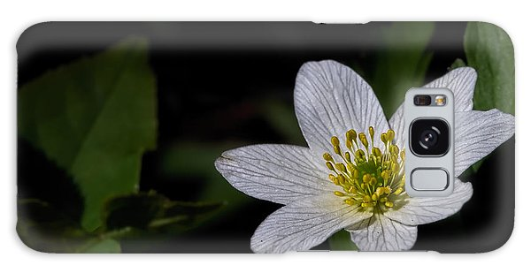 Galaxy Case featuring the photograph Anemone Nemorosa  By Leif Sohlman by Leif Sohlman