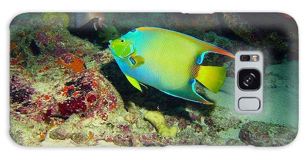 Mangrove Snapper Galaxy Case - Angel Fish by Carey Chen