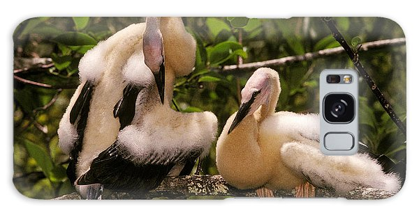 Anhinga Chicks Galaxy Case