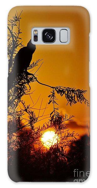 Anhinga Sunset Galaxy Case