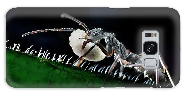 Ant Carrying Larva Galaxy Case