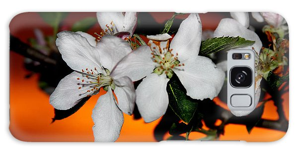 Apple Blossom Sunrise I Galaxy Case