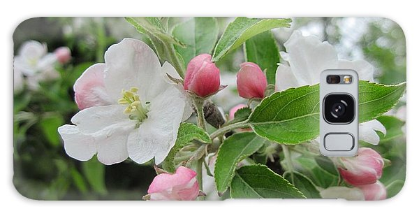 Apple Blossoms And Buds Galaxy Case by Patricia E Sundik