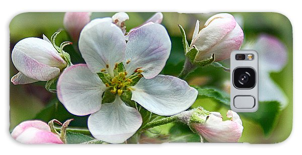 Apple Blossom And Buds Galaxy Case